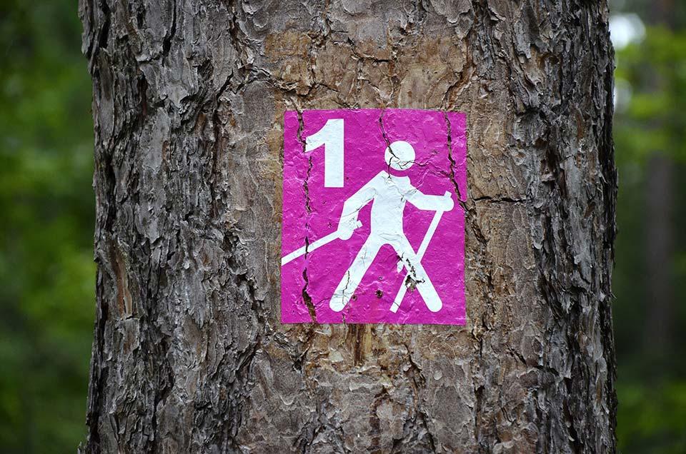 Nordic walking Sulęcin